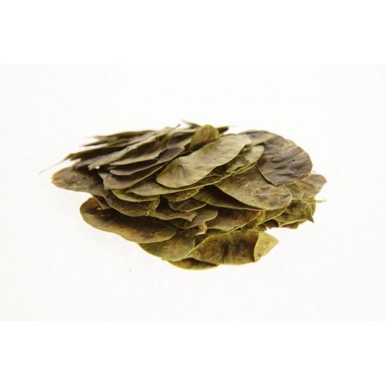 Φύλλα Αλεξάνδριας